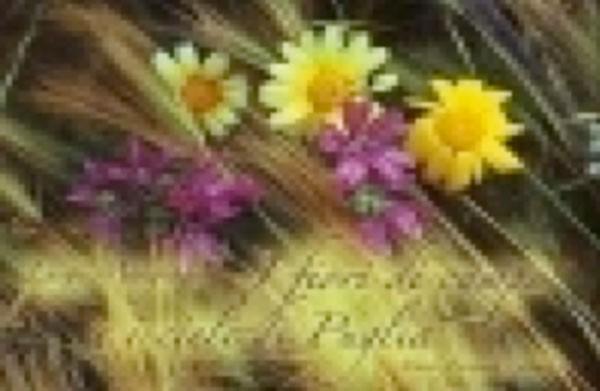 I fiori di campo e i cieli di Puglia